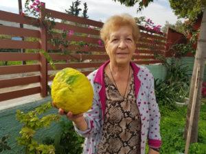 Απίστευτο! Στους Αγίους Θεοδώρους λεμονιά βγάζει λεμόνια που φτάνουν τα 3 κιλά [Video]